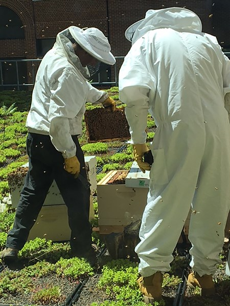 Bee_Keeper_honeyIMG_1242_hi_res