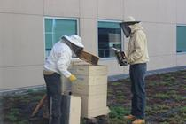 beekeeper checks hive for Hackensack Honey